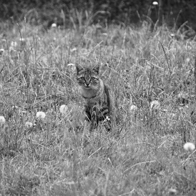 Free Stock Photo of Cat Hiding in Grass Created by Richard Revel
