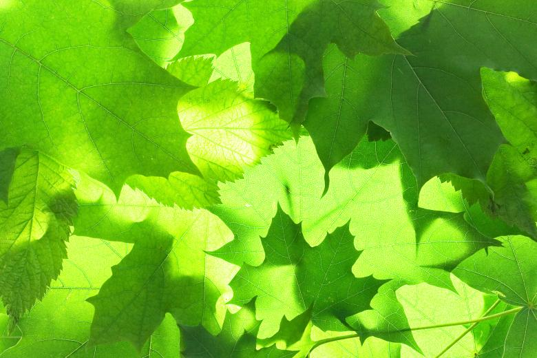 Green Natural Leaves - Free Floral Backgrounds