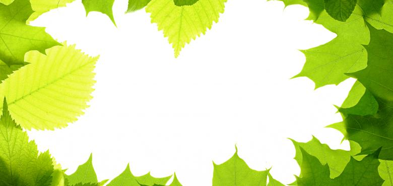 Green Leaves Frame - Free Floral Backgrounds
