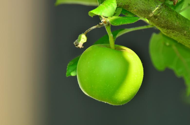 Free Stock Photo of Green Apple Created by Pixabay