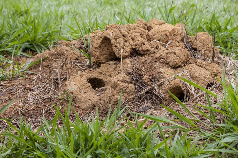 Free Stock Photo of Ant hill Created by Eduardo Soares Bogosian