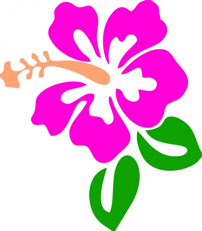 Flower Vector Illustration Free Stock Photo By Anong Lov On