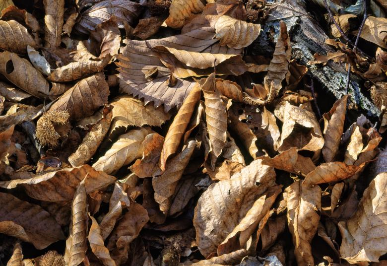 Fallen Leaves Free Photo
