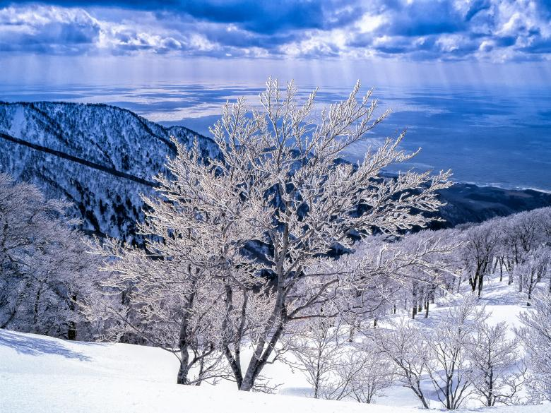 In Winter Free Photo