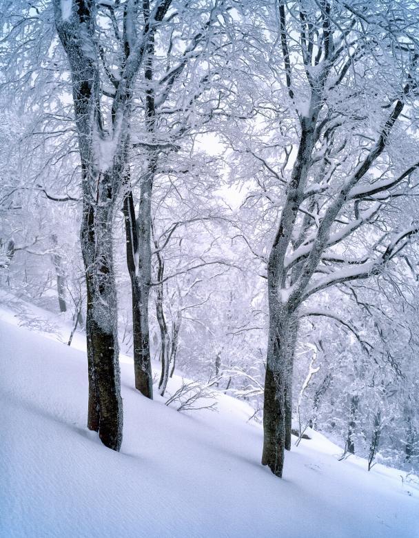 Frozen Winter - Free Winter Stock Photos