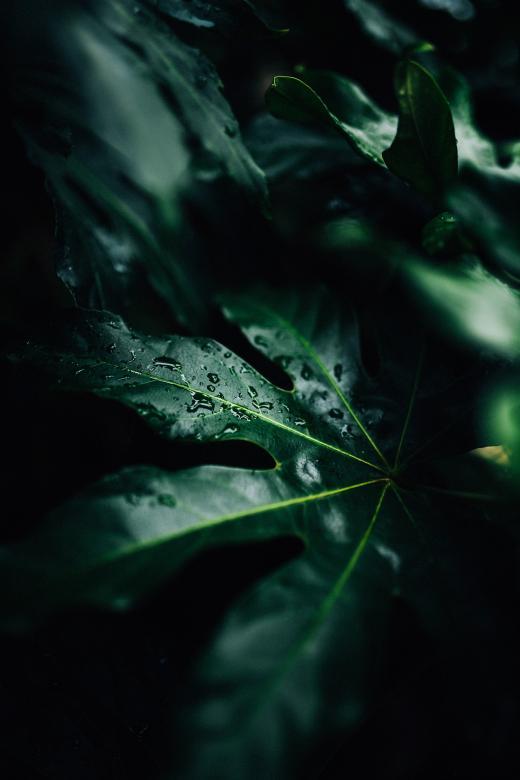 Leaf Closeup - Free Organic Backgrounds
