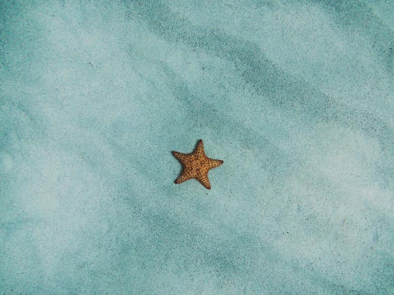 Free Stock Photo of Lonely Starfish Created by Pixabay
