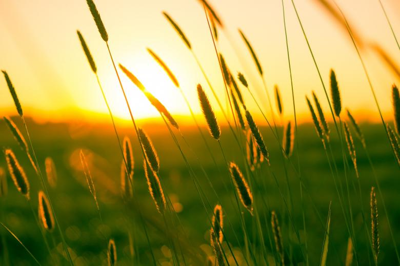 Free Stock Photo of Summer Grass Created by Pixabay