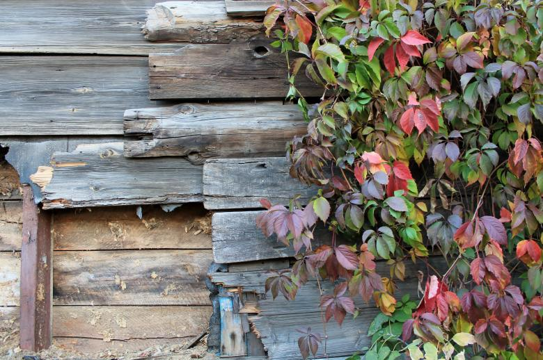 Free Stock Photo of Autumn Leaves Against Wooden Wall Created by  Талашманов Александр