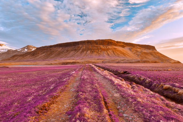 Free Stock Photo of Iceland Sunset Tractor Trail - Tickle Me Purple Created by Nicolas Raymond