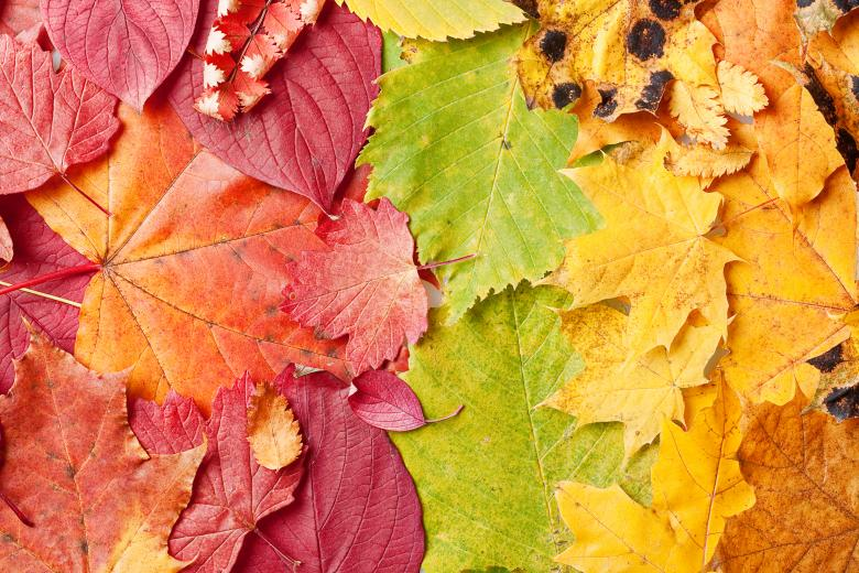 Free Stock Photo of Autumn Leaves Background Created by 2happy