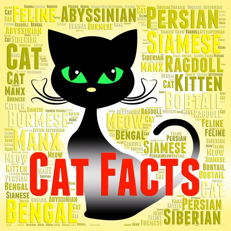 cat facts shows true knowledge and puss free stock photo by stuart