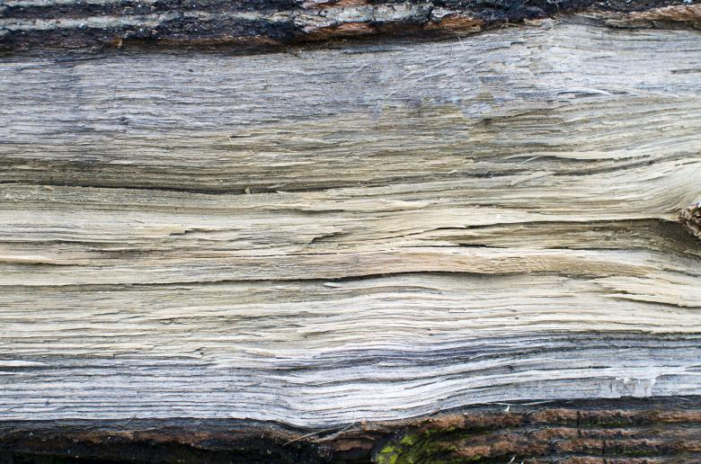 Free Stock Photo of Old Dry Timber Texture Created by Lukas