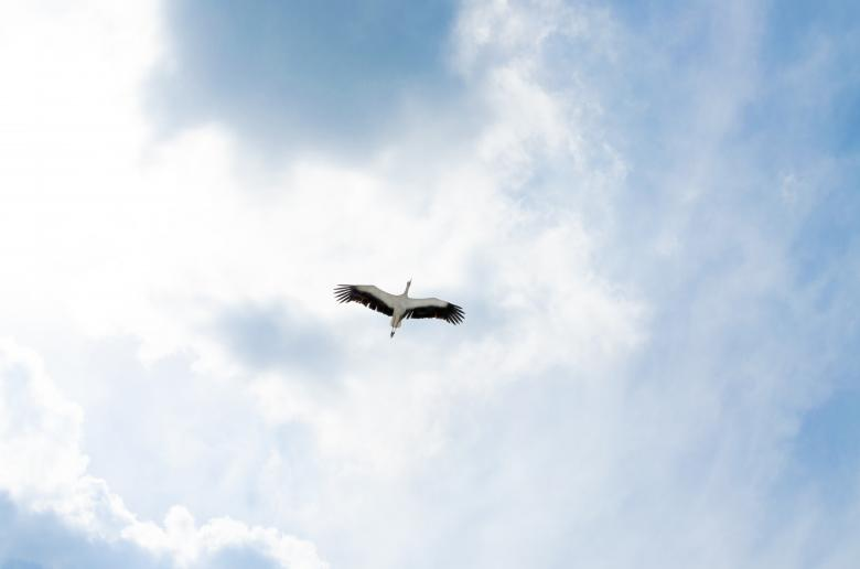 Free Stock Photo of Heron in the Air Created by Lukas