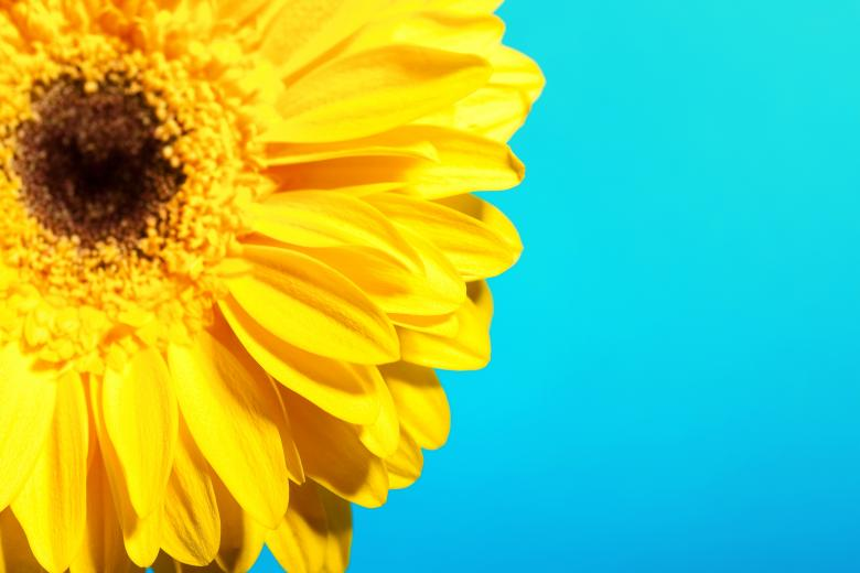 Free Stock Photo of Yellow Beautiful Flower Created by 2happy