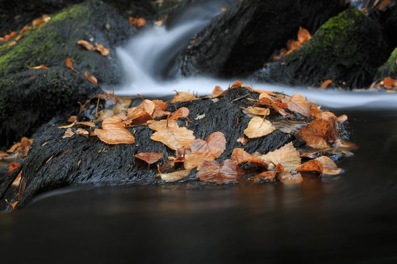Free Stock Photo of Autumn Stream and Leaves Created by Geoffrey Whiteway