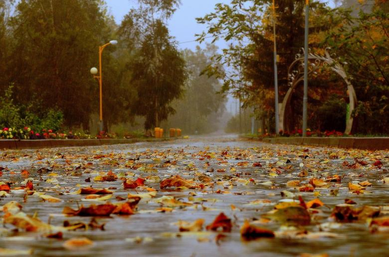 Free Stock Photo of Autumn in the park Created by Katerina