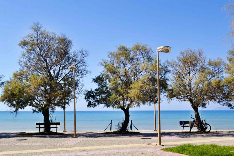 Free Stock Photo of Still Seascape with Trees and benches Created by Dana Tentis