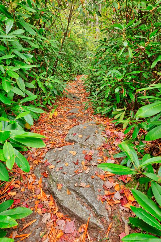 Free Stock Photo of Rocky Rhododendron Trail - Pase Point Created by Nicolas Raymond
