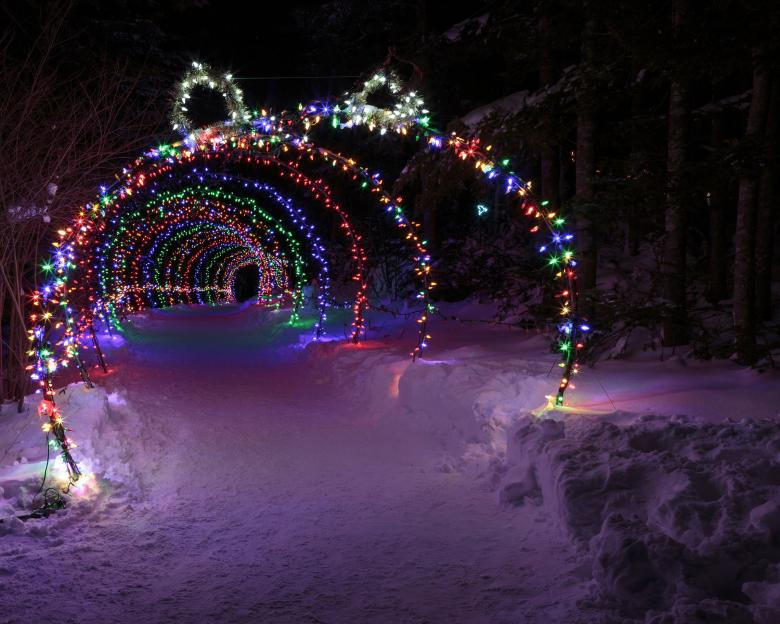 free stock photo of outdoor christmas lights tunnel created by geoffrey whiteway
