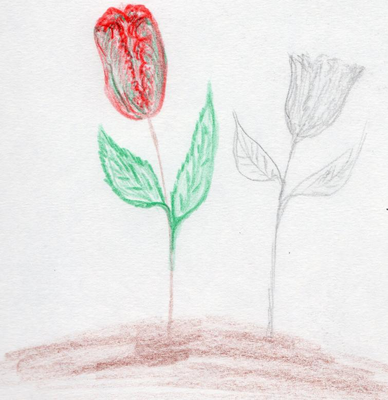 Free Stock Photo of Rose - Hand drawn art Created by rudy liggett