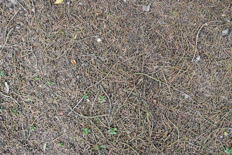 Free stock image of Earthly Ground Texture created by ValérianTextureInComing