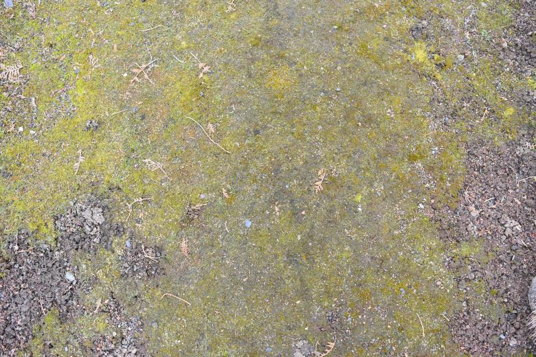 Free stock image of Mossy Ground Surface created by ValérianTextureInComing