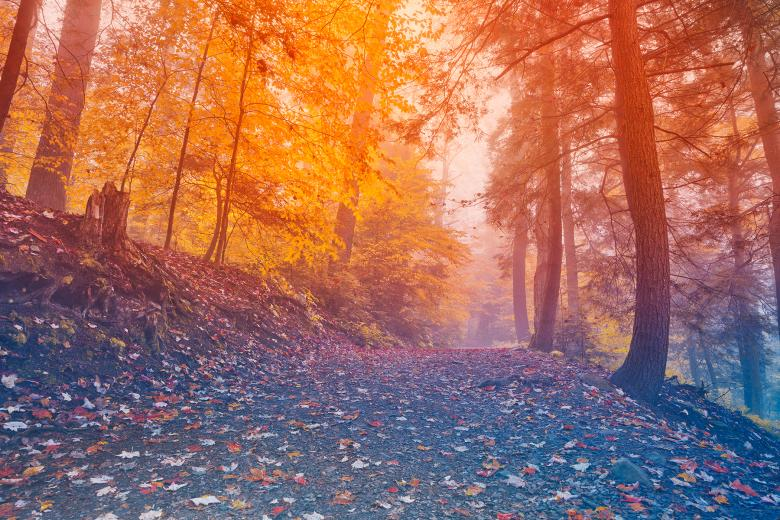 Free Stock Photo of Rainbow Mist Forest Created by Nicolas Raymond
