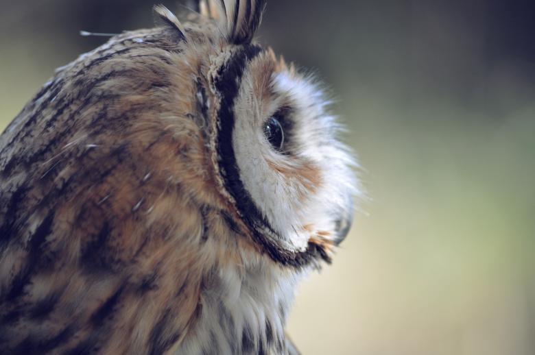 Free Stock Photo of Owl Wild Life Created by Photostockeditor