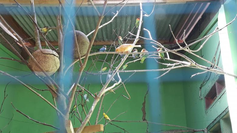 Free Stock Photo of Love Bird Aviary Created by bang doel