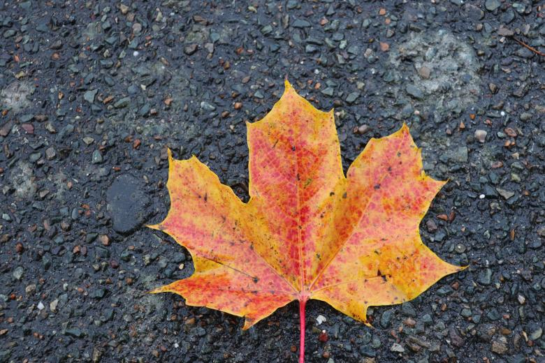 Free Stock Photo of Yellow-red leaf on a street Created by GAIMARD Jacques