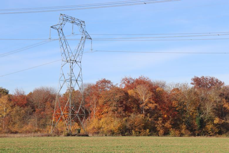 Free Stock Photo of Autumn Trees and Power Lines Created by GAIMARD Jacques