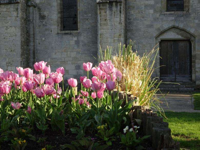 Free Stock Photo of Pink tulip's bed and old church Created by GAIMARD Jacques