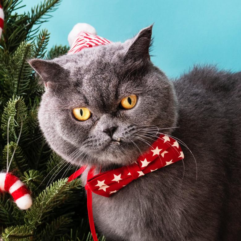 Free Stock Photo of Christmas Cat Created by balbir
