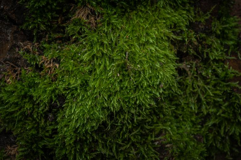 Free Stock Photo of Green Moss Texture Created by PaSoNeCa