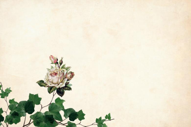 Vintage Flower On Paper Background Free Stock Photo By Mohamed