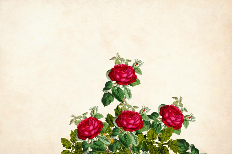 Free Stock Photo of Red Roses Vintage Flower Background Created by mohamed hassan