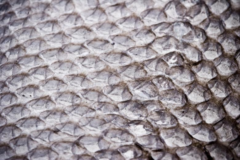 Free Stock Photo of Dried Fish Scales Created by Bjorgvin Gudmundsson