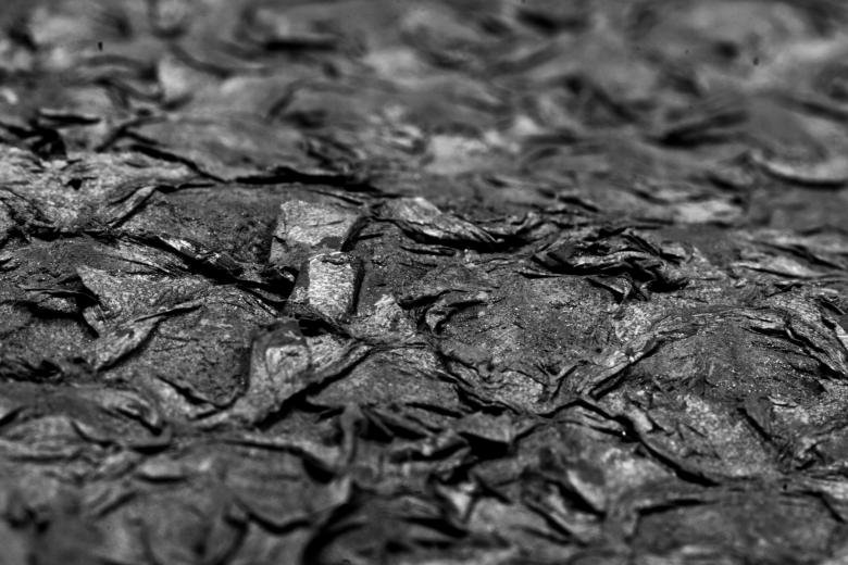 Free Stock Photo of B&W Dry Fish Scales Created by Bjorgvin Gudmundsson