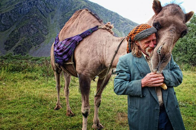 Free Stock Photo of Man and his Camel Created by nana tchelidze