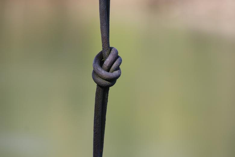 Free stock image of Make a knot, so you do not forget... created by GAIMARD Jacques