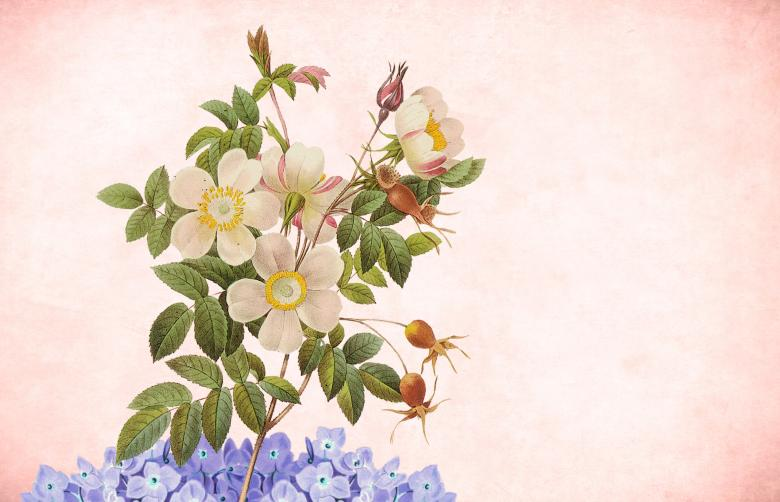 Free Stock Photo of Vintage Floral Paper Postcard Background Created by mohamed hassan