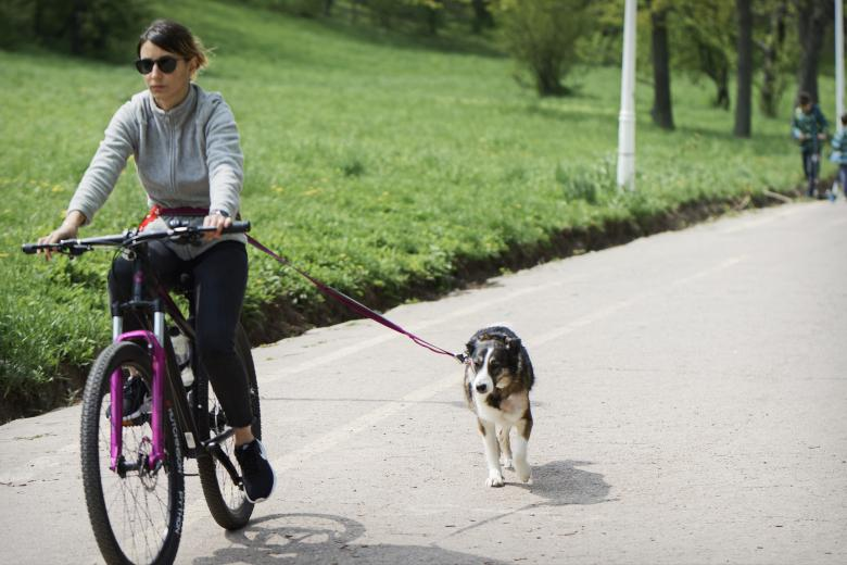 Free Stock Photo of Girl on bicycle with Dog Created by Mircea Iancu