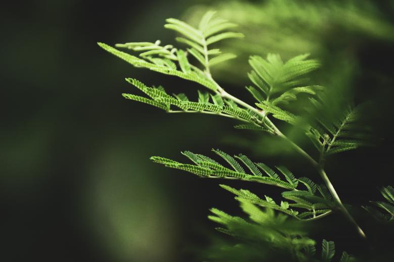 Free Stock Photo of Selective photography of fern leaves Created by Mayank kumar satlewal