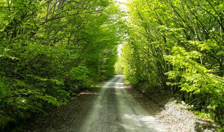 Free Stock Photo of Road Through Green Forest Created by selim çatak