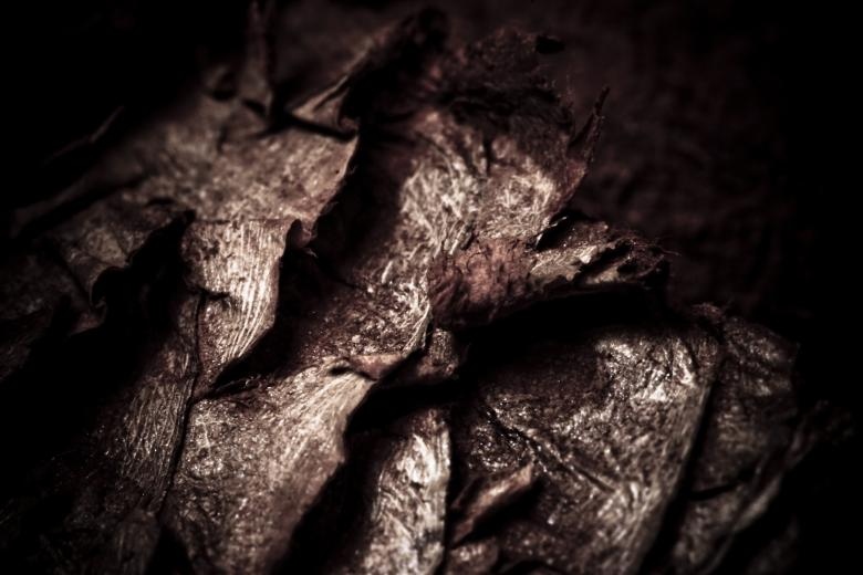 Dried Fish Scales - Dark Background - Free Stock Photo by