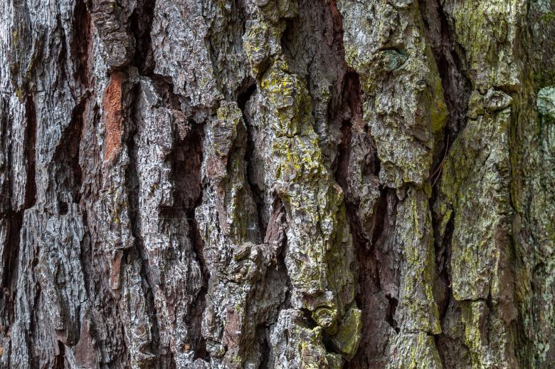 Free Stock Photo of Rough Bark Texture Created by PaSoNeCa