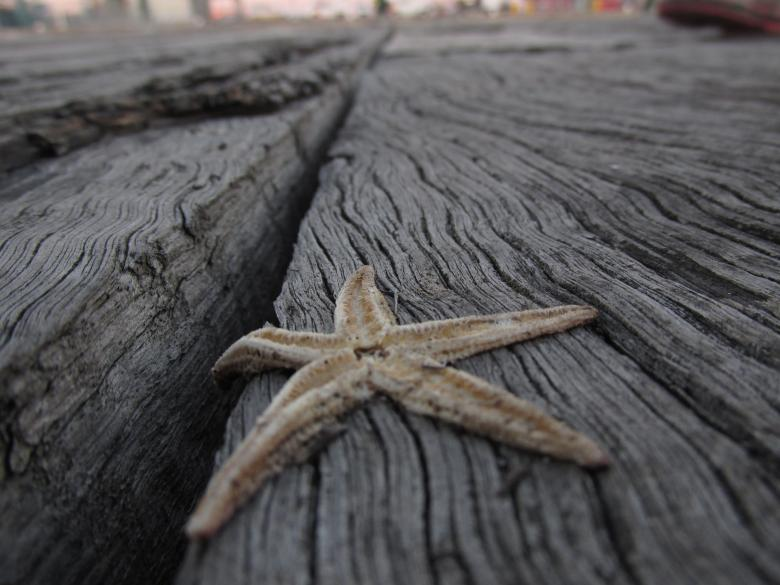 Free Stock Photo of Dead starfish Created by Michiru Maeda