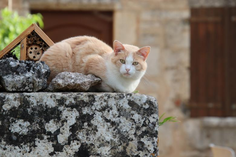 Free Stock Photo of Cat on a big stone Created by GAIMARD Jacques