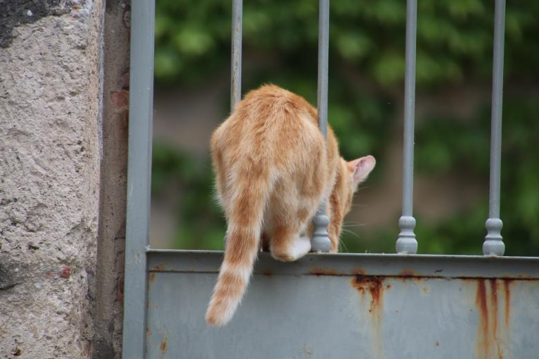 Free Stock Photo of Ginger cat jumping through a rusted metallic door Created by GAIMARD Jacques